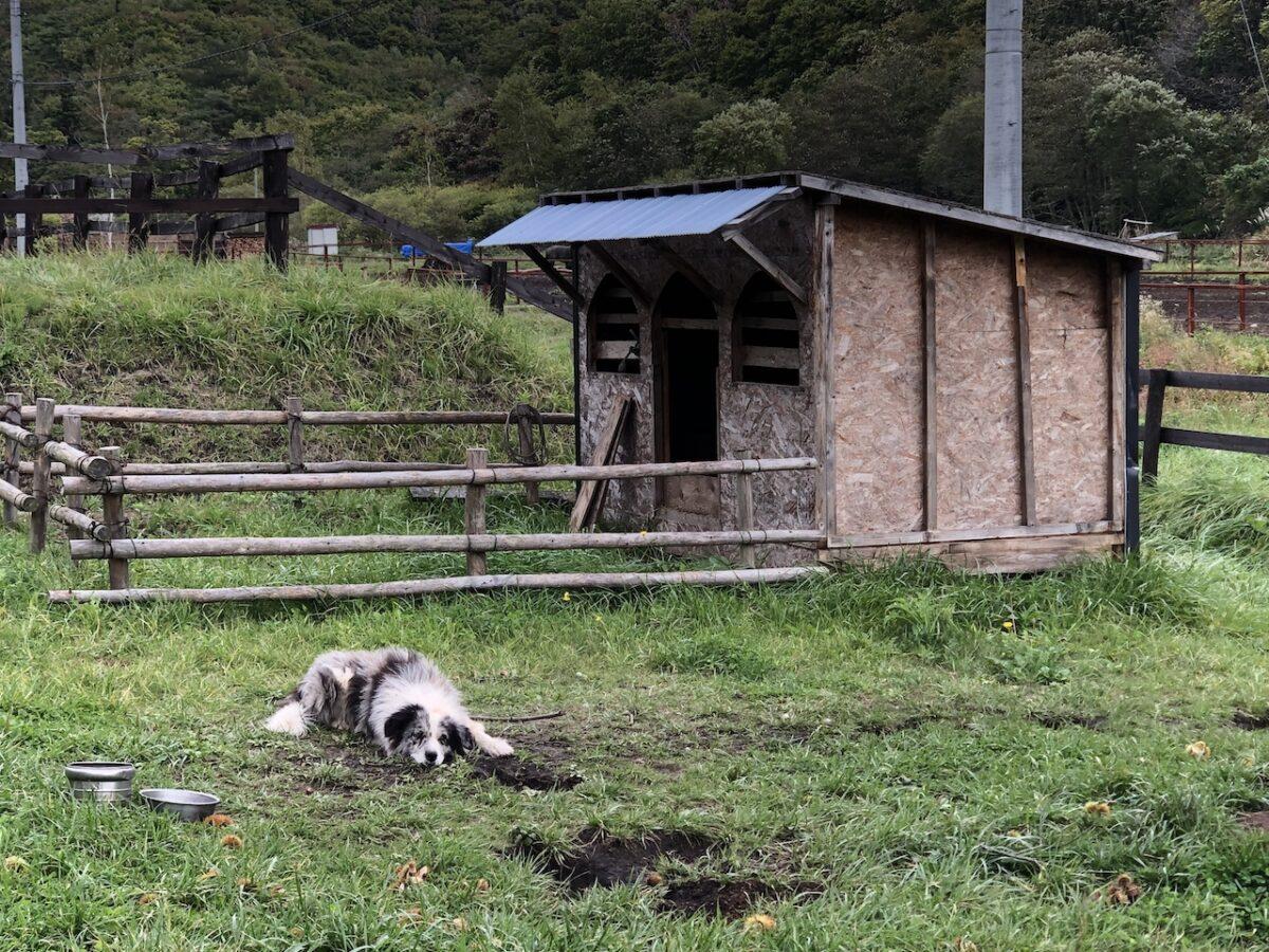 【2泊3日函館2日目】乗馬体験→足湯(湯の川温泉)→五稜郭→函館山!
